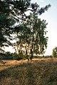 Haltern am See, Westruper Heide -- 2015 -- 7959.jpg