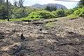 Hanalei, Kauai, Hawaii - panoramio (37).jpg