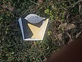 Hardees fry container in grass.jpg