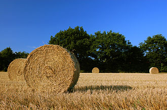 Autumn - Harvest straw bales in a field of Schleswig-Holstein, Germany