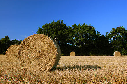 Straw of hay in a field of Schleswig-Holstein, Germany. Harvest Straw Bales in Schleswig-Holstein.jpg