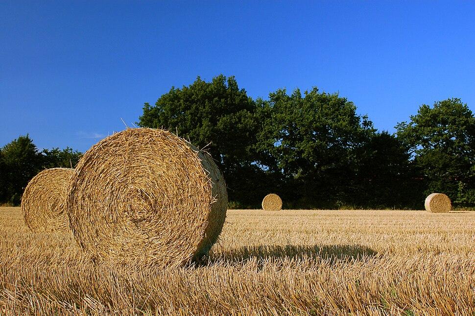Harvest Straw Bales in Schleswig-Holstein