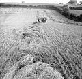 Harvesting at Mount Barton, Devon, England, 1942 D10344.jpg