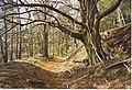 Hascombe Beech. - geograph.org.uk - 167835.jpg