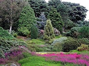 Erica - Heather Garden, Ness Botanic Gardens