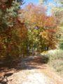 Herbst1-Schoenbuch-Deutschland.jpg