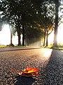 Herbstallee.jpg