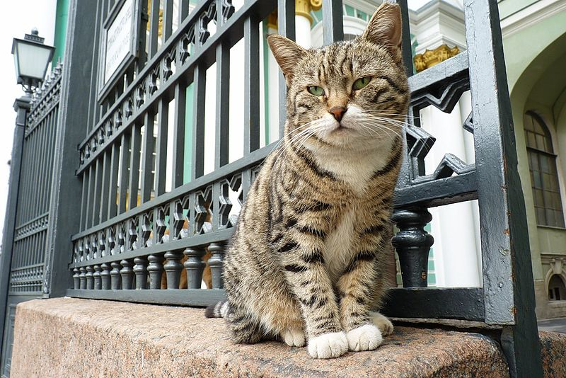 Hermitage Museum in Russia Cats