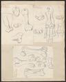 Hippopotamus amphibius - 1700-1880 - Print - Iconographia Zoologica - Special Collections University of Amsterdam - UBA01 IZ21900021.tif
