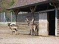 Hirsche Bruderhaus2.jpg