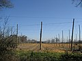 Hop Fields at Wagstaff Farm, Wagstaff Lane, Biddenden - geograph.org.uk - 368027.jpg