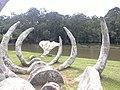 Huesos de Ballena, Parque La Sabana - panoramio.jpg