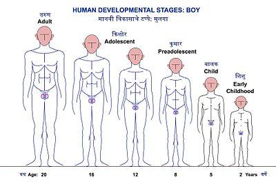शिशुवयापासून तारुण्यापर्यत मुलाच्या वाढ व विकासाच्या टप्प्यांच्या प्रातिनिधिक आकृत्या.