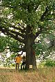 Hungarian oak2.JPG