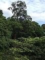 Hutan Alam Mandi Angin Minas Riau 11.jpg