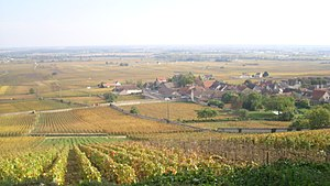 Volnay wine - Vineyards around Volnay. Most of the vineyards in the image, those to the left of the village and immediately beyond it, are classified Premier Cru. In the far distance are some village-level vineyards.