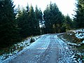 Icy Forest Road - geograph.org.uk - 84304.jpg