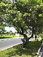 Iguape - SP - panoramio (108).jpg