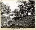 In Gage's Wood, Oct 21, 1900. (15959694708).jpg