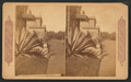 In Woodward's Gardens, San Francisco, from Robert N. Dennis collection of stereoscopic views.png