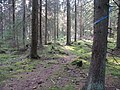 In sunny forrest - panoramio.jpg