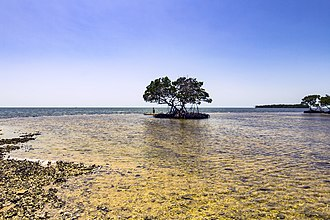 Ten Thousand Islands - Indian Key Pass - Ten Thousand Islands