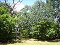 Ingelsta ekbackar, den 11 juli 2007, bild 2.JPG