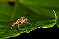 Insekt 6700.jpg