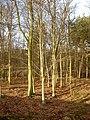 Inside Ladyclose Wood - geograph.org.uk - 1716316.jpg