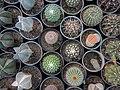 "Iran-qom-Cactus-The greenhouse of the thorn world گلخانه کاکتوس ""دنیای خار"" در روستای مبارک آباد قم- ایران 19.jpg"