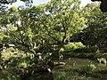 Iris Pond of Kashii Shrine 2.jpg