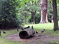 Jackdaws in the grounds of Pembroke Lodge, Richmond Park - geograph.org.uk - 1426794.jpg