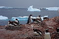 Jan2009AntarticaSailTrip054 (3262376849).jpg