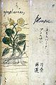 Japanese Herbal, 17th century Wellcome L0030095.jpg