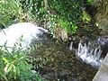 Jardin botanique Dijon 003.jpg