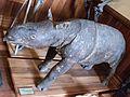 Javan Rhinoceros, Canterbury Museum, 2016-01-27.jpg