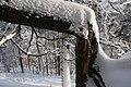 Jetrichovice im Schnee - panoramio - Niederkasseler (1).jpg