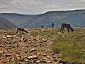 Jeune caribou et mère PNG.jpg