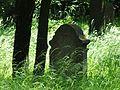 Jewish cemetery in Szczucin 1.jpg