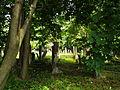 Jewish cemetery in Szydlowiec Poland 1.JPG