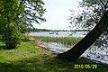 Jezioro Miedwie - panoramio.jpg