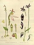 Joseph Dalton Hooker - Flora Antarctica - vol. 3 pt. 2 plate 120 (1860).jpg