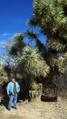 Joshua Tree At Grapevine Springs Ranch AZ.png