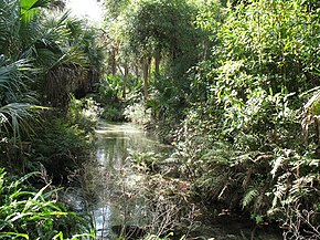 Ocala National Forest Wikivisually