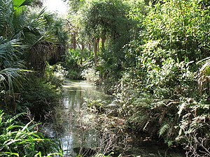 Ocala National Forest - Juniper Springs in the Ocala National Forest
