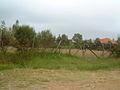 KENYA GRASS.jpg