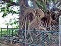 Kam Tin Tree House - 2007-09-30 13h55m08s SN200780.jpg