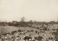 Katsena 1911 2.png