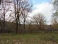 Khorol's'kyi district, Poltavs'ka oblast, Ukraine - panoramio (363).jpg