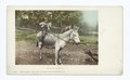 Kind and Gentle, Burro (NYPL b12647398-62291).tiff